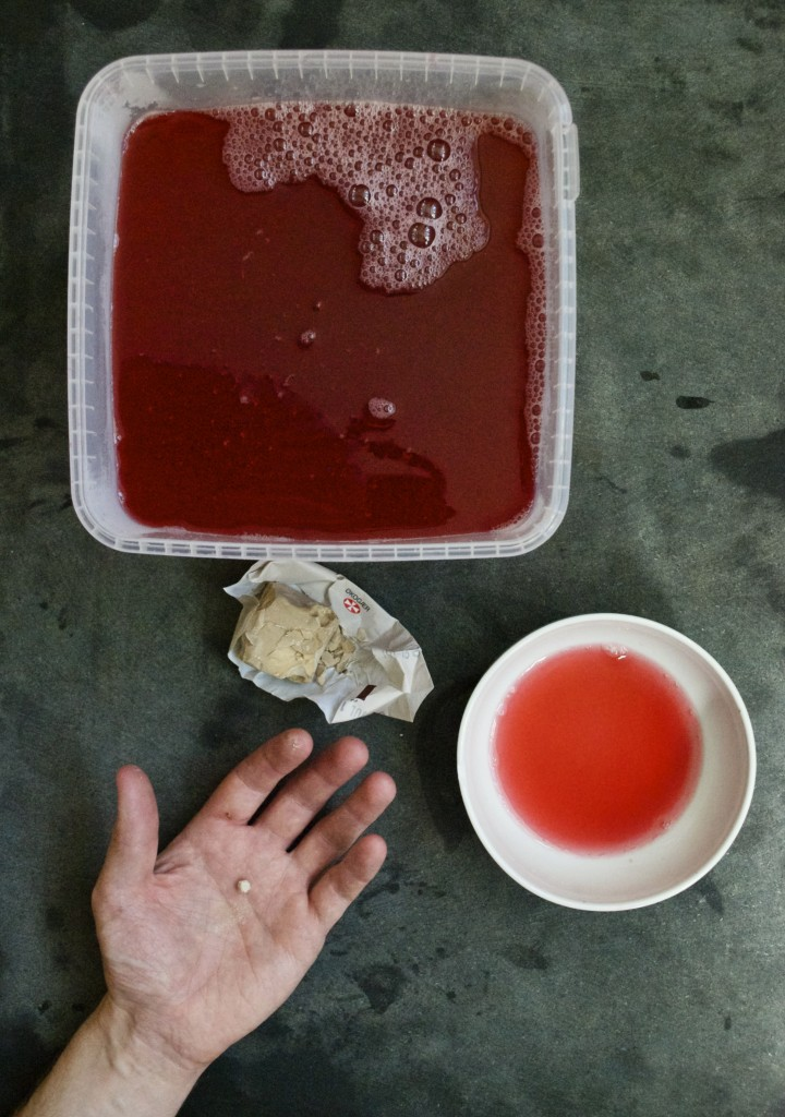 Sådan laver du hjemmelavet sodavand og rabarbersodavand